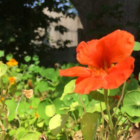 La Maison Verte | Flower garden